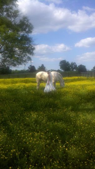 Bride in a paddock behind the event center with Ransom, our carriage horse.