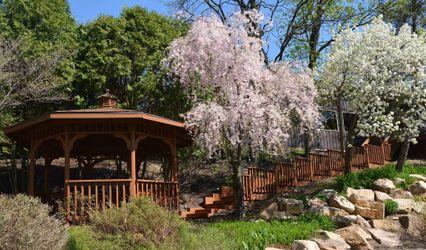 Willow Tree Grove