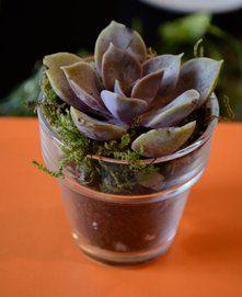 Glassflowerpot3