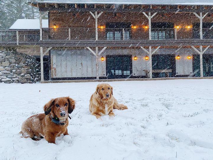 Tmx Dogs In Snow Near Barn 51 942134 158273291591702 Sparrow Bush, NY wedding venue