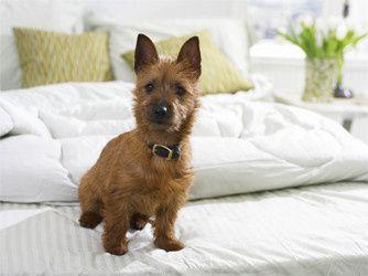 Tmx 1421949132917 Pet Friendly Hotel Dog Bed Warrenton wedding travel