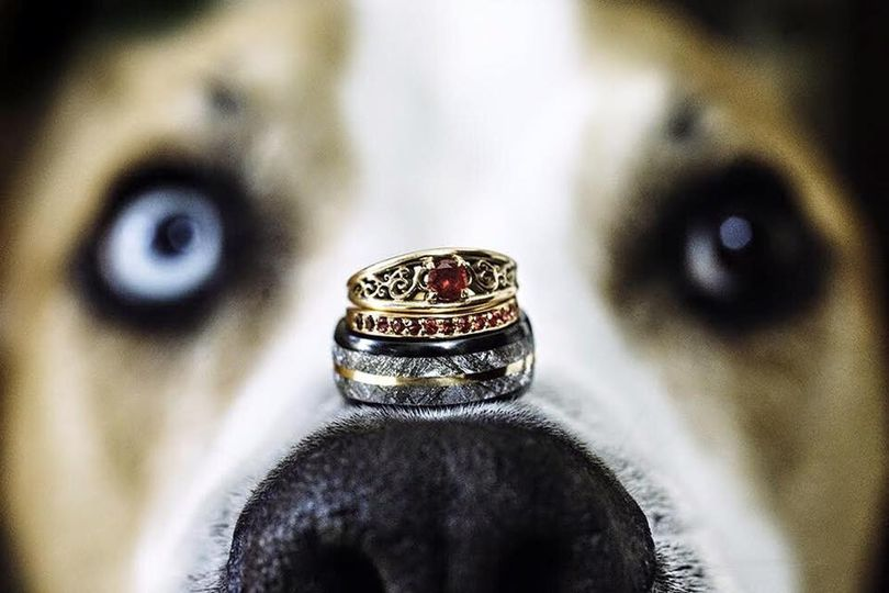 Rings resting on dog's nose
