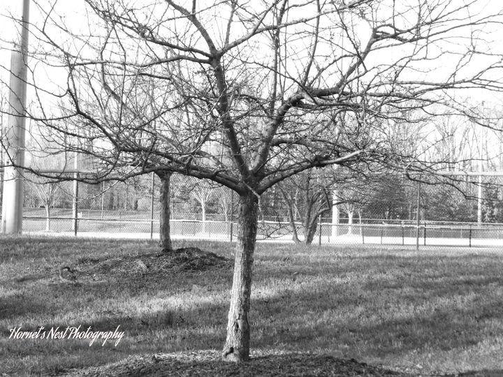 banndwtree 2 28