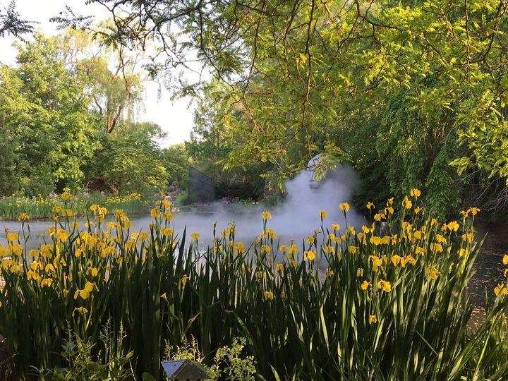 Rat's Coy Pond