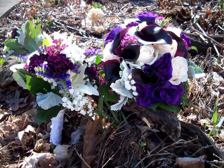 Luxurious purple petals