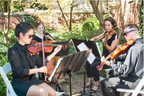 Volare String Quartet