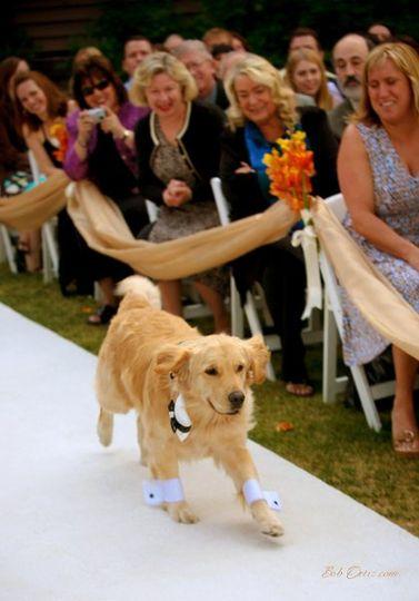 Dog on the aisle