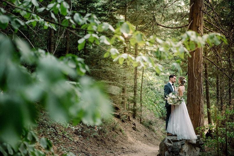 Modern Forest Romance