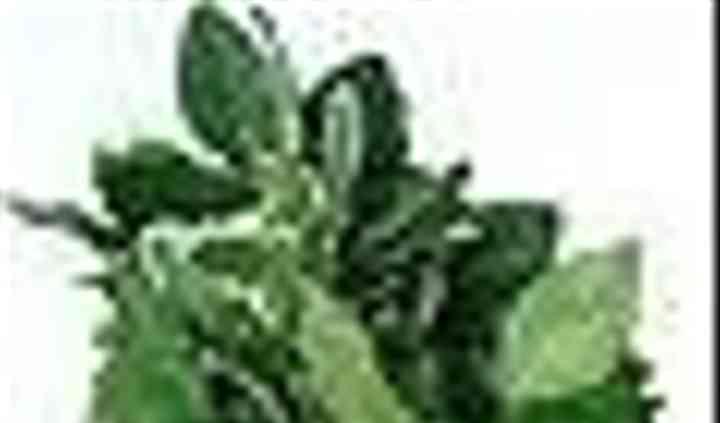 Decorative-Greens.Com