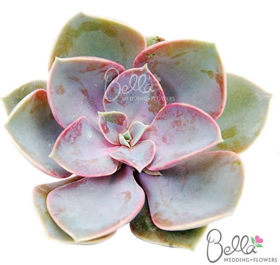 succulentsfrostedgem3