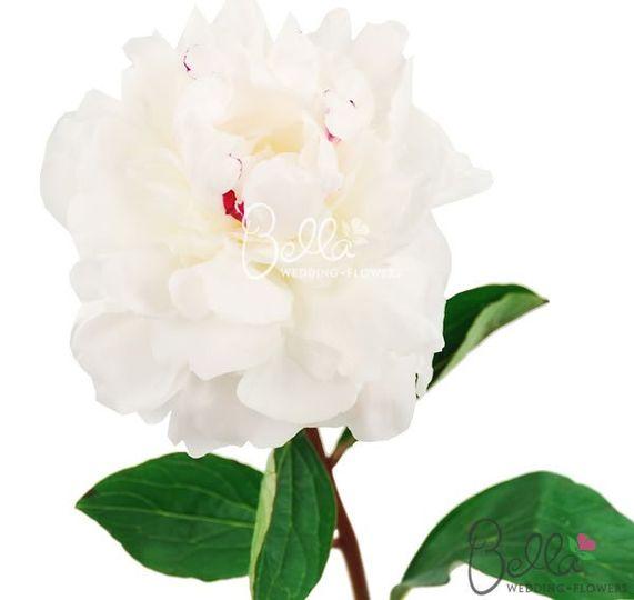 bella wedding flowers flowers los angeles ca weddingwire. Black Bedroom Furniture Sets. Home Design Ideas