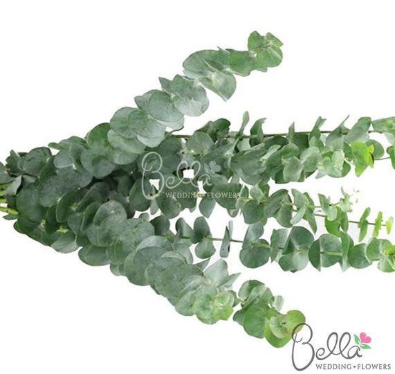 greenerymixedeucolyptus