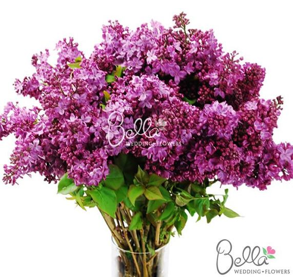purplelilac1