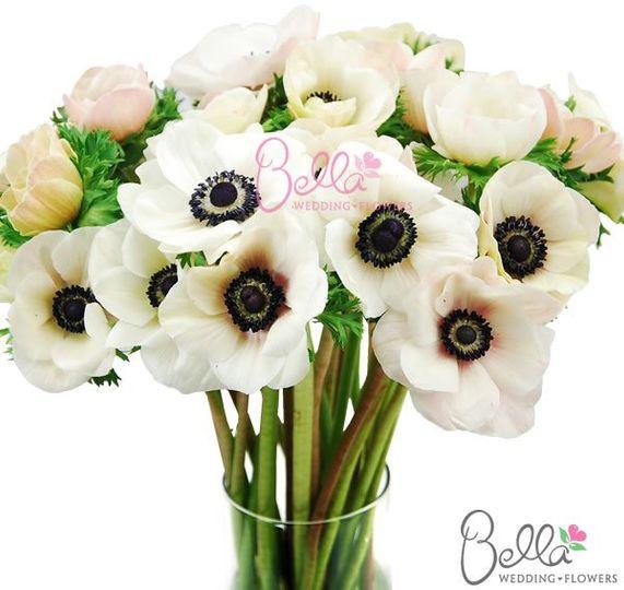 anemoneflowersblush4