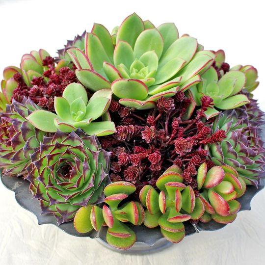 Mountain Crest Gardens - Flowers - Fort Jones, CA - WeddingWire