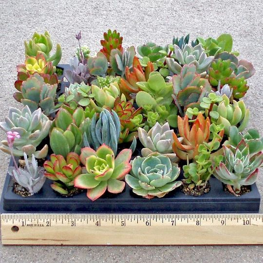 soft succulent tray 6