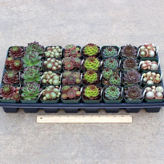 semp wholesale 2 5 containers select varieties