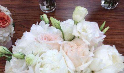 Daisy & Wish - Flowers by Betty Walton