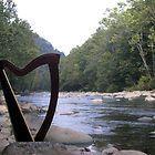 harp by creek