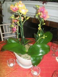 floralelement101