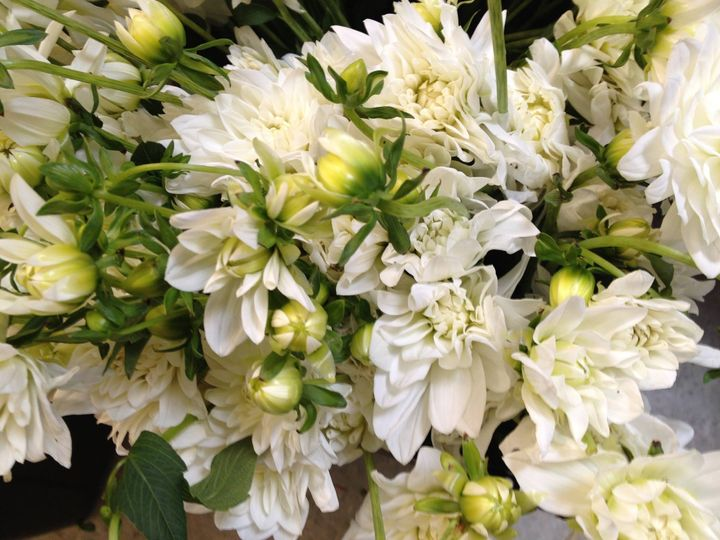All white blooms