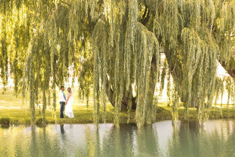 Quiet time under the willow
