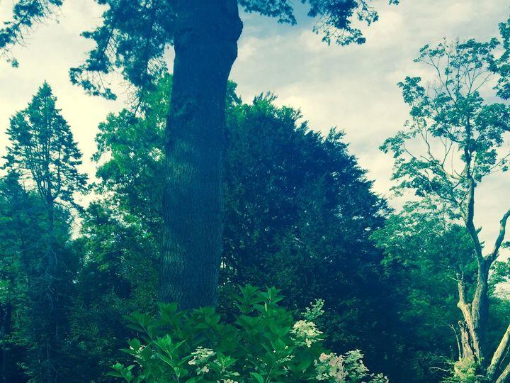 Tmx 1471634165929 Trees North Andover wedding venue