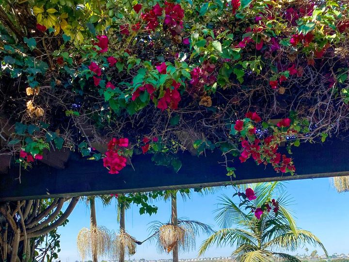 Tmx Bayview Garden Ceremony 51 102754 160598314151847 Newport Beach, CA wedding venue