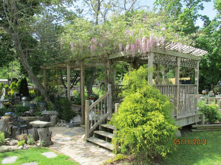 Just a couple of short weeks in May, the Pergola is covered in beautiful wisteria blooms!