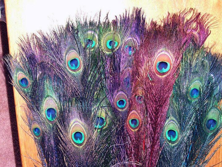 Tmx 1459969610075 Jewel Mix Peacock Feathers Stem Dyed Menomonee Falls wedding florist
