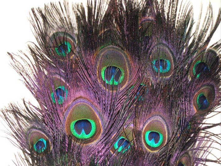 Tmx 1459970255598 Stem Dyed Regal Purple Detail Menomonee Falls wedding florist