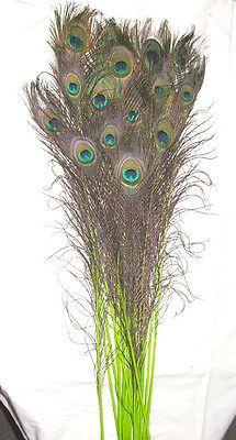 Tmx 1459970366758 Stem Dyed Lime Green 30 35 Inch Menomonee Falls wedding florist
