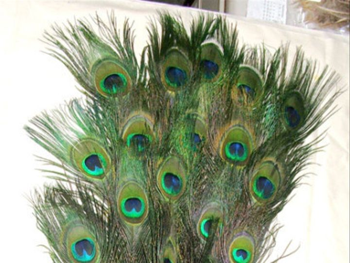 Tmx 1459970698012 Stem Dyed Kelly Green 30 35 Inch Menomonee Falls wedding florist