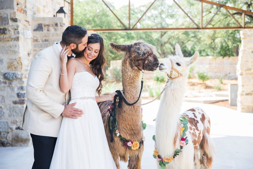Wedding with Llamas Park 31