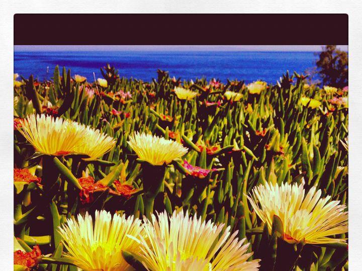 Tmx 1415299639164 Succulents Summerland wedding videography