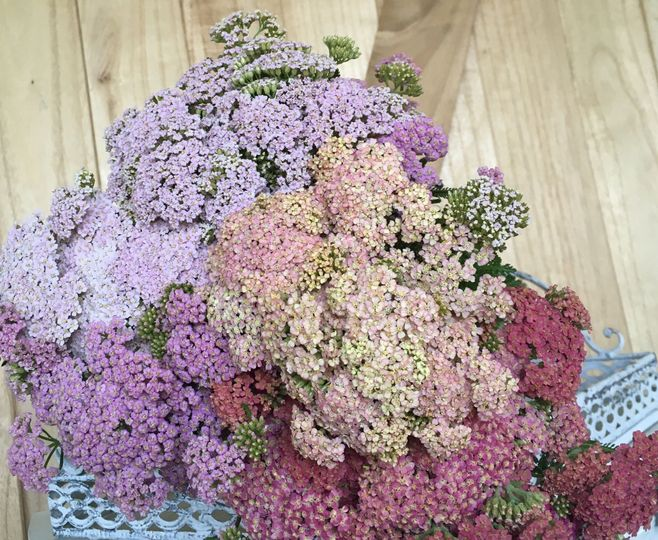 Yarrow (awesome, airy filler)