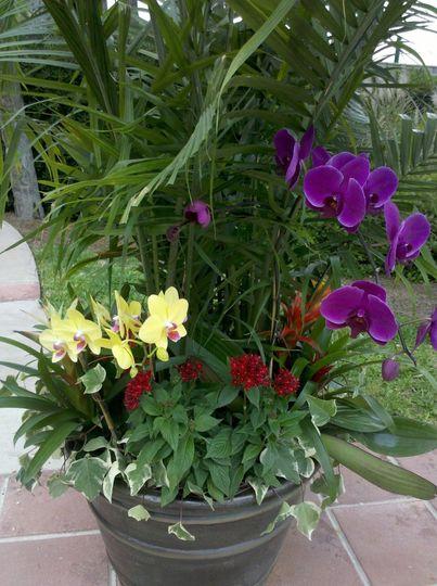 palmflowercloseup2