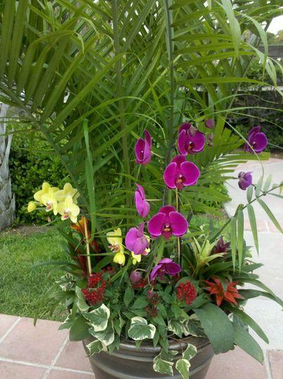 palmflowercloseup