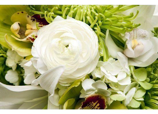 Tmx 1328025800723 2488747599445480742030293738728841937502n Dubuque wedding florist
