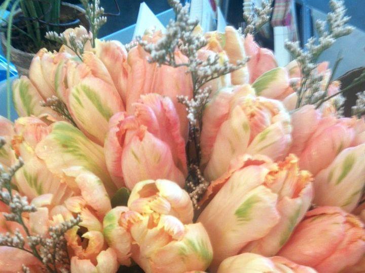 Tmx 1342380962038 20120601115051306 Dubuque wedding florist