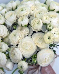 Tmx White Image Of Ranunculus Flower 51 972274 158411175294519 Cloverdale wedding florist