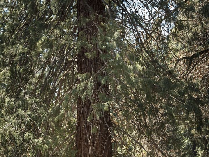 Tmx 1528484407 917077bb1393ffe6 1528484404 236cb7fb38dc5153 1528484372042 22 DSC 1441 4x6 Yosemite National Park, CA wedding venue