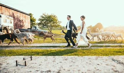 The Vermont Wedding Barn at Champlain Valley Alpacas