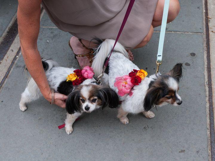 Tmx Sj 101 51 975574 Rego Park, NY wedding florist