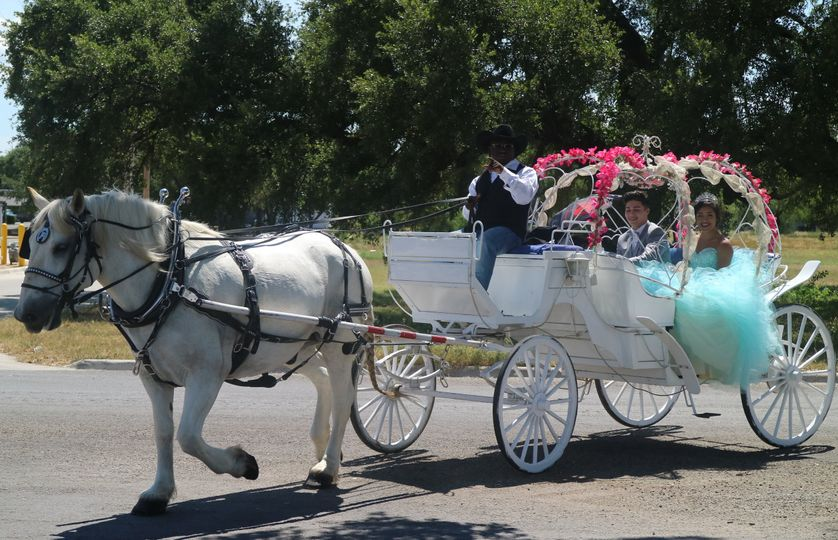 White Horse and Carriage Co.
