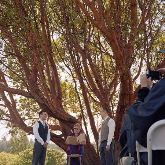 wedd under tree ceremony