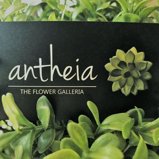 Antheia The Flower Galleria