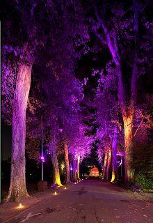 Tmx 1535733997 8d79e4efcadf999e 1535733996 B1ef5a380cd8cf32 1535733995257 1 Copy Of Rgb Trees Fort Worth wedding eventproduction