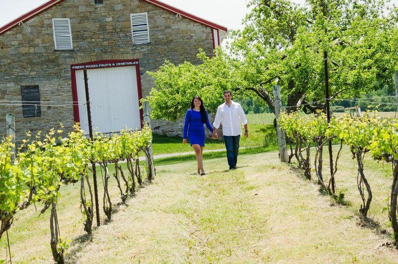 Vineyard at Freedom Run Winery