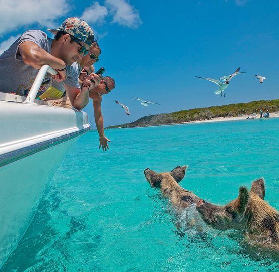 Pig Swim Exuma